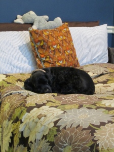 Black dog sleeping on a bed